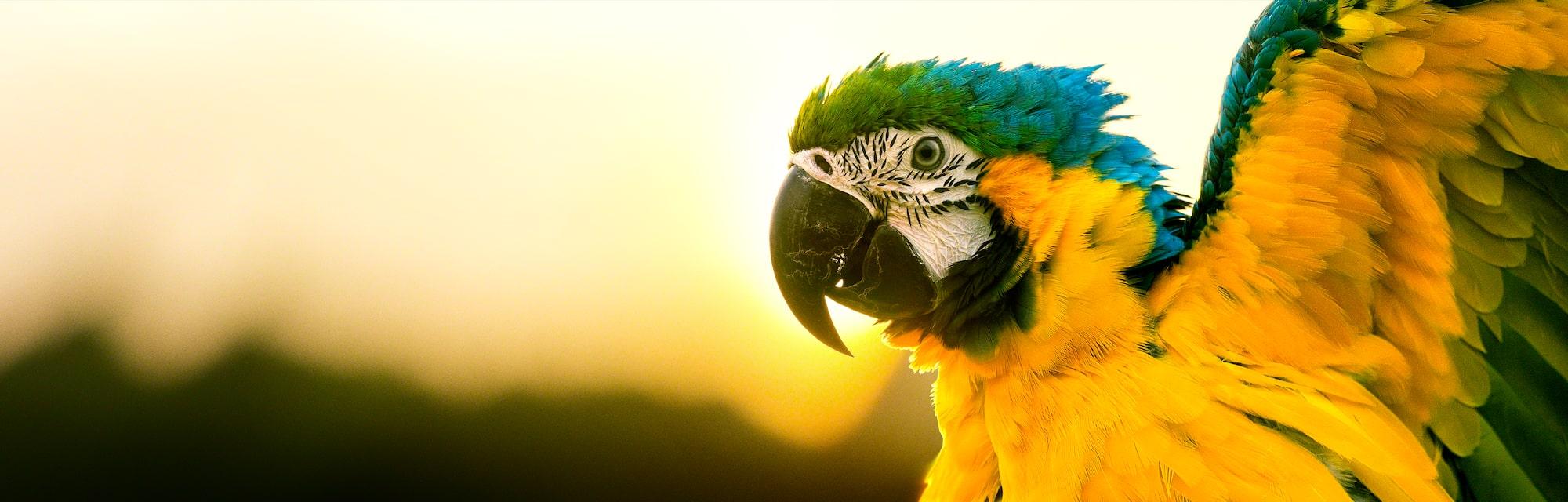 Υπέροχες εικόνες OLED, όπως τις βλέπει το ανθρώπινο μάτι