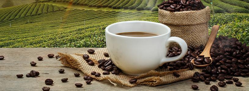 Φρεσκοκομμένος Καφές