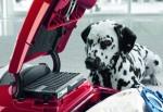 Σκούπα Miele C3 Complete Cat & Dog PowerLine Μπορντώ